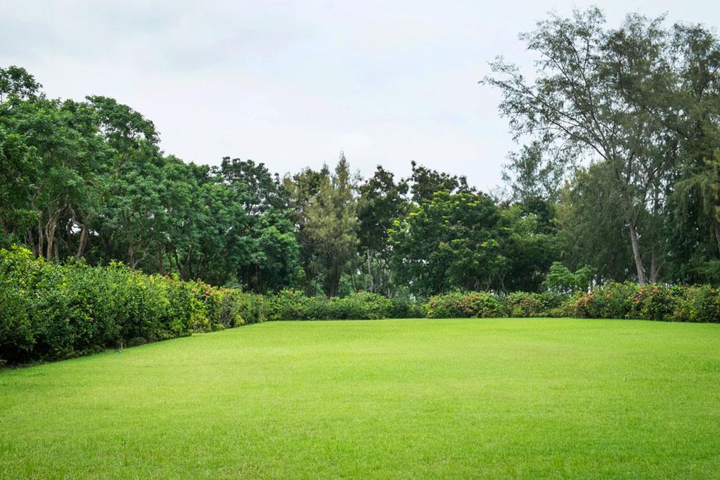 Garden perspective