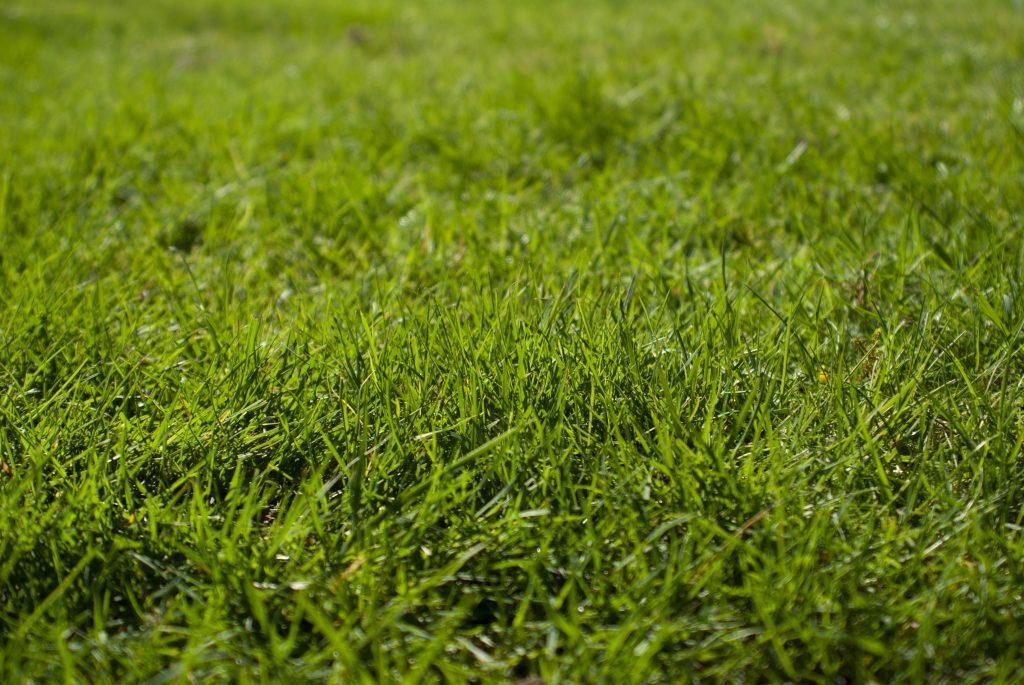 lawn maintenance Crawley