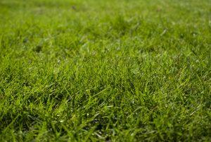 Gossops Green garden turfing